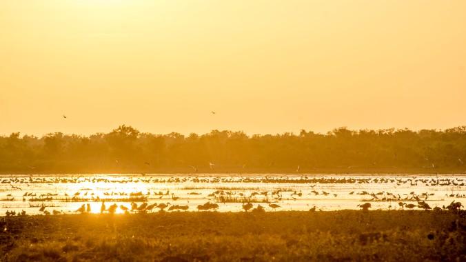 kakadu - mamukala wetland (9).jpg