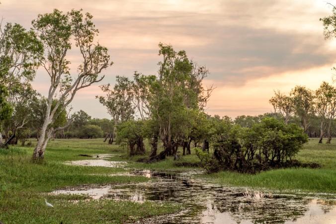 kakadu - yellow water (16).jpg