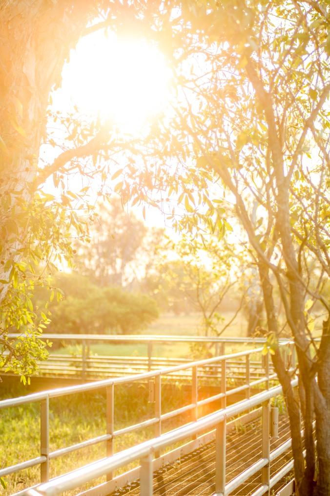 kakadu - yellow water (5).jpg
